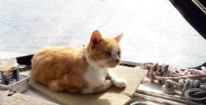 Gazou le chat le plus aventurier du monde