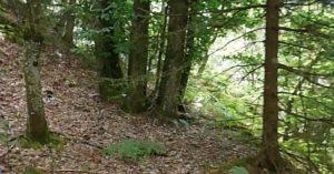 emplacement abri bushcraft